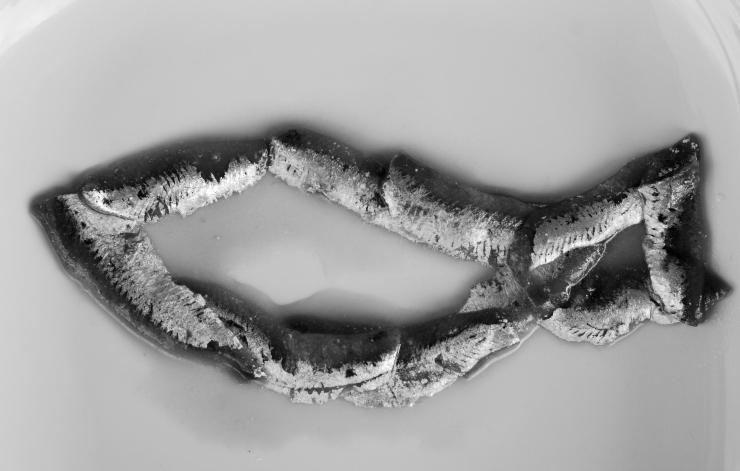 Formgiven Fisk