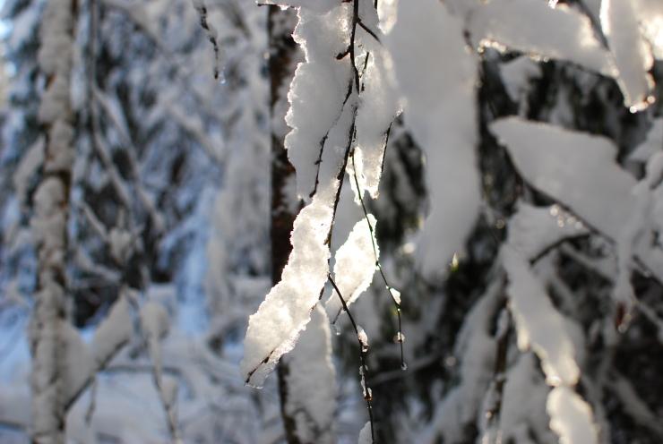 Vinterbild3