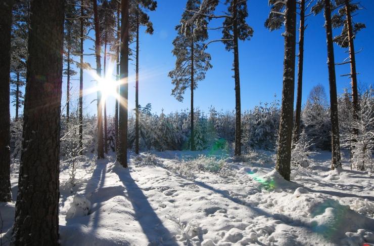 Vinterbild5