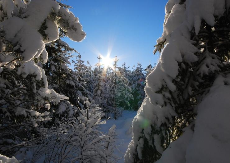 Vinterbild7