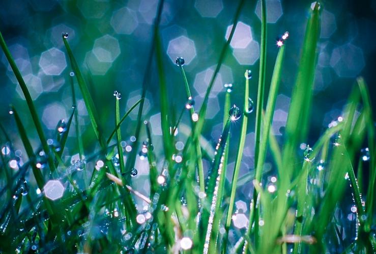 Morgondagg i gräset