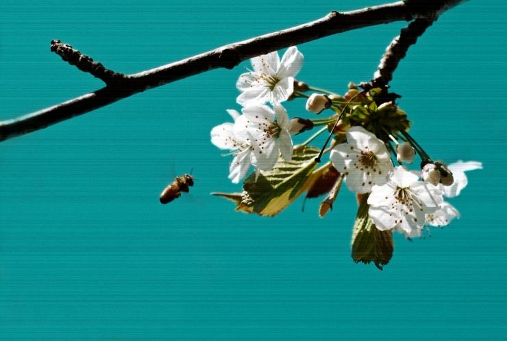 Blommor och bi