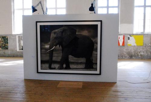 Nick Brandt - Elefant