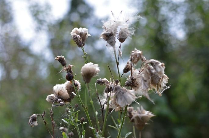 Torkad blomma