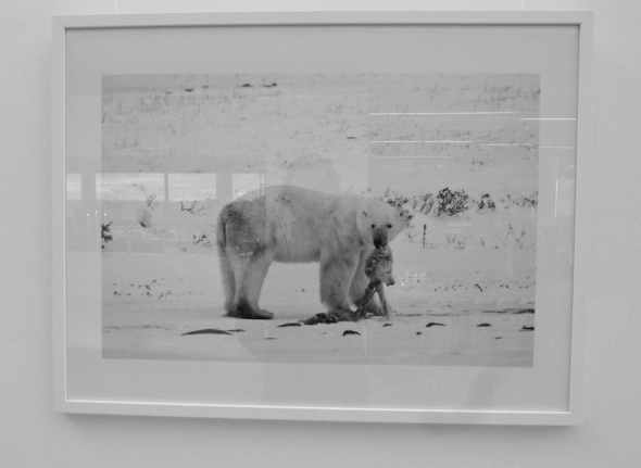 Photo - Polar bear