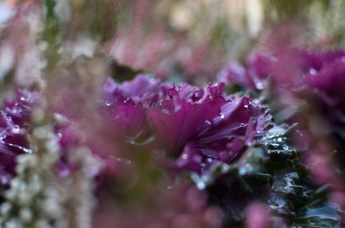 Löfbergs lila blomma