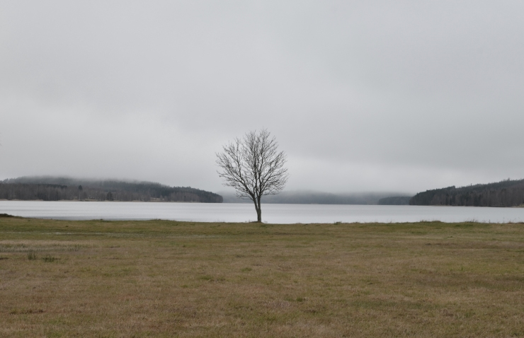 """Trädet vid sjön"""