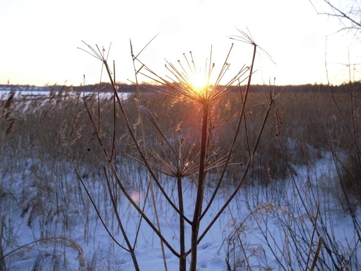 Soluppgång måndag morgon