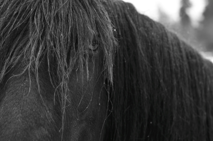 A Horse With No Name