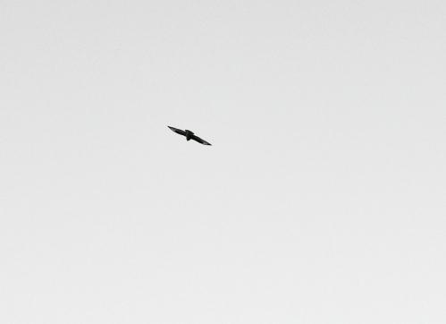 De vilda flyger
