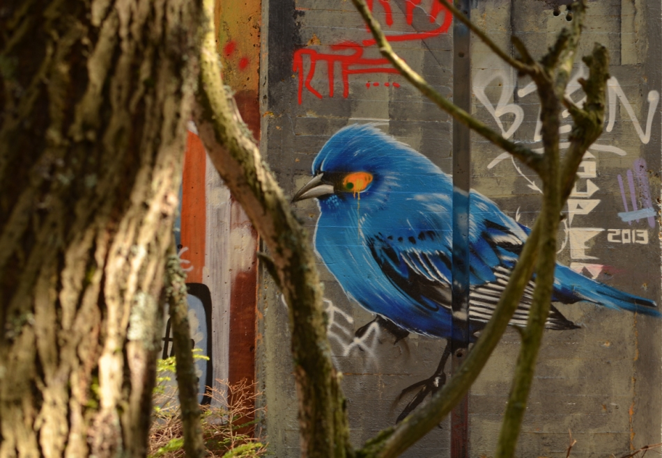 Blue Bird in the tree