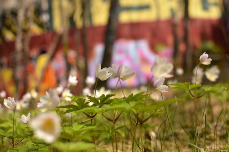 Flowers meet Graffiti