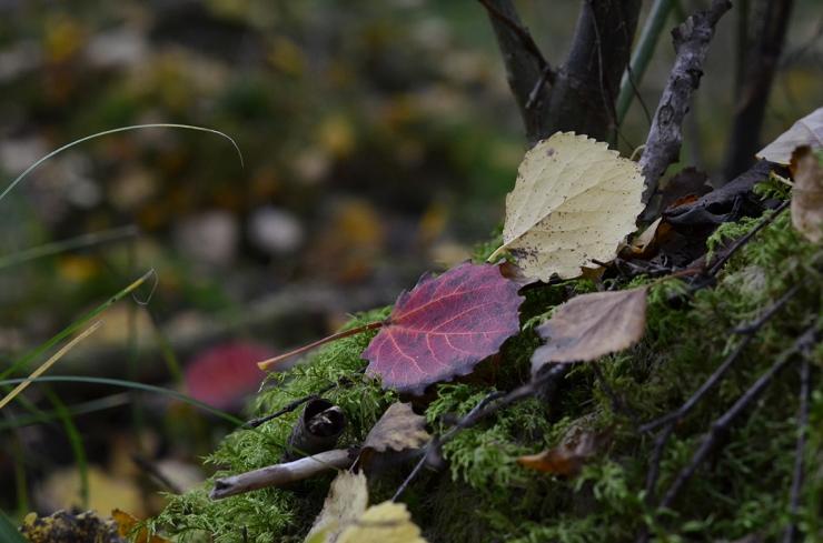 Höstlöv i skogen