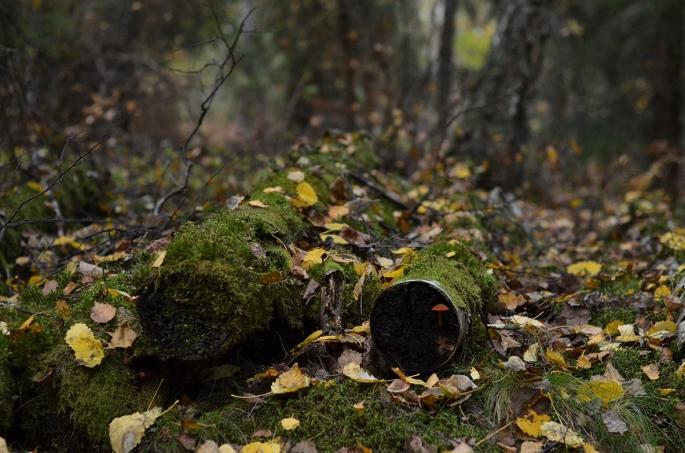 Höst i skogen