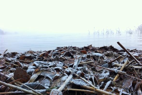 Frost på stranden