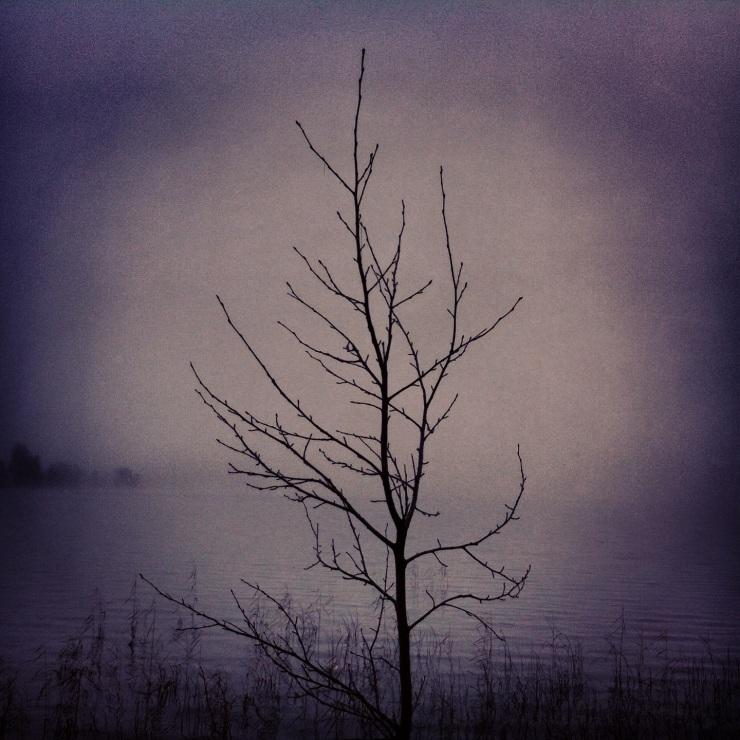 Ett ungt och ensamt träd