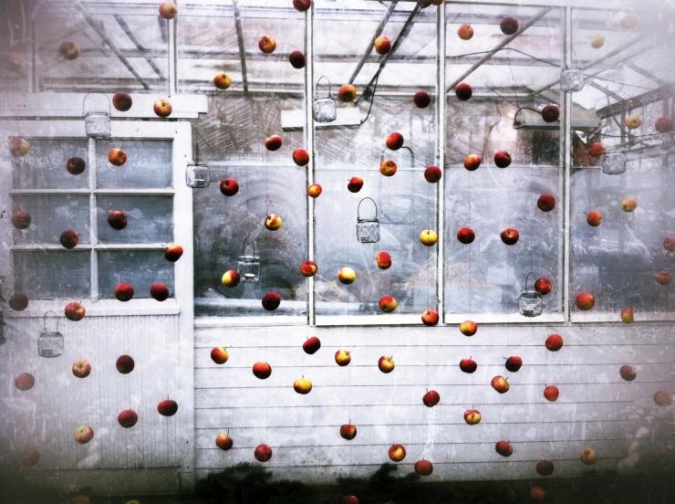 Ett draperi av äpplen