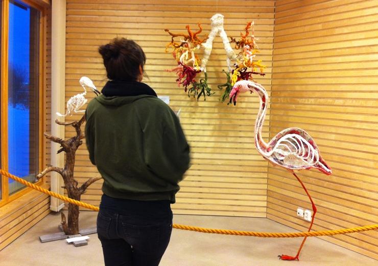 Flamingo - Djurens virkliga värld