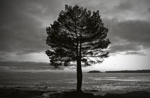 Konturer av ett träd