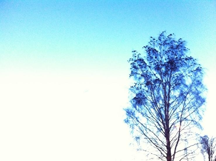 Fågelträd