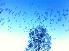 Fria fåglar flyger