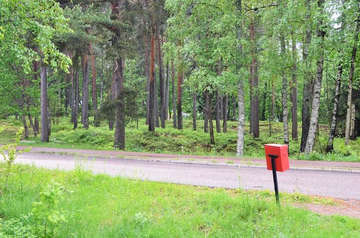 Skogsdungen