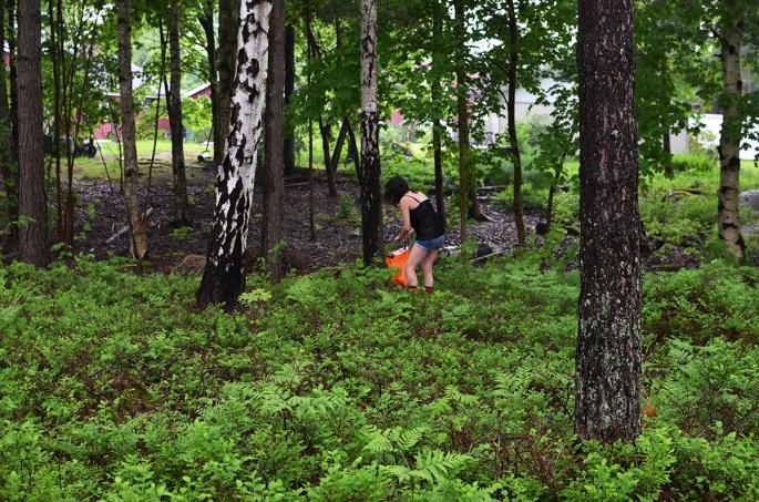 Städar skogen