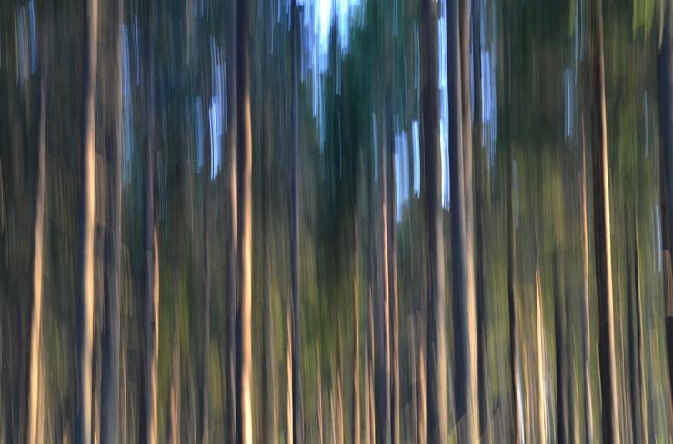 Mot trädtopparna