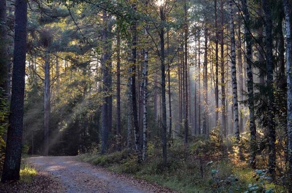 Höstsol  i skogen