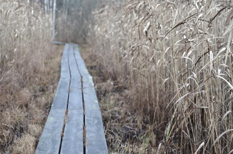Träspång_webb_DSC_1386