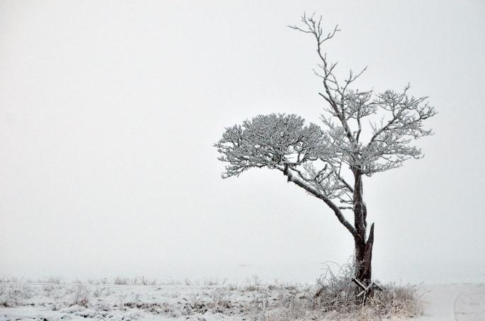 Ett träd i vitt