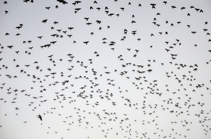 Fåglar i vitt