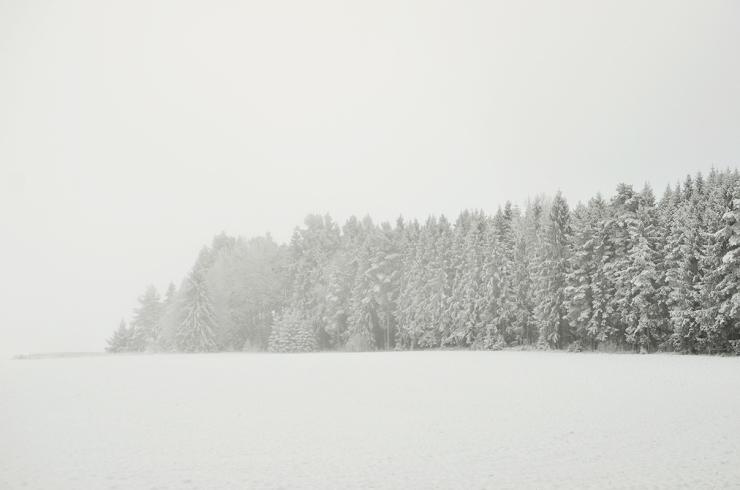 En skog i vitt
