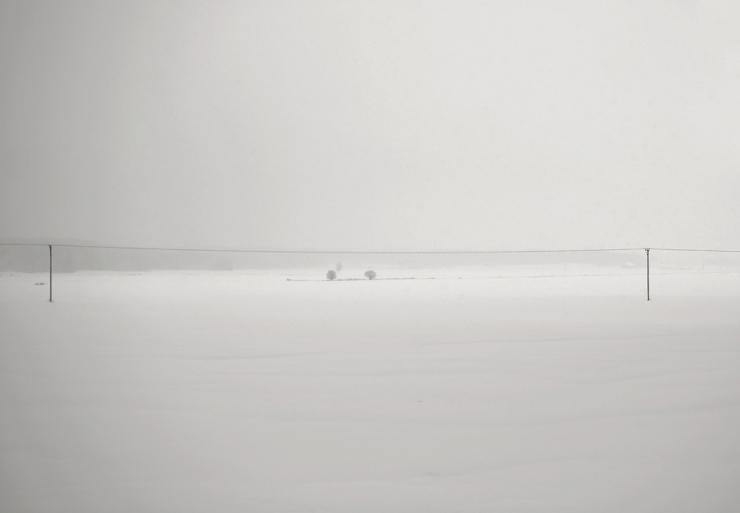 Vintervitt