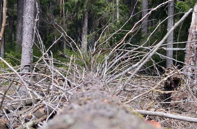 Träd i skogen