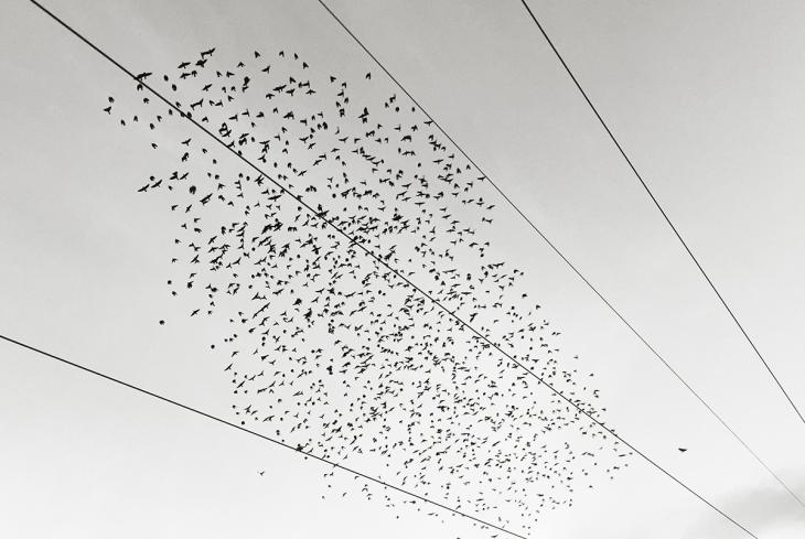 Melody of birds