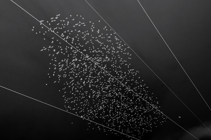 IMG_1612_Fåglar_IR_Blå_webb