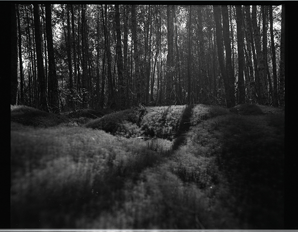Light in the forest - 120 film