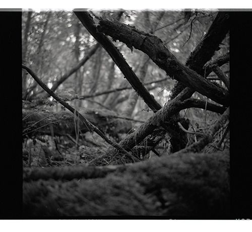 Forest- 120 film Nettar