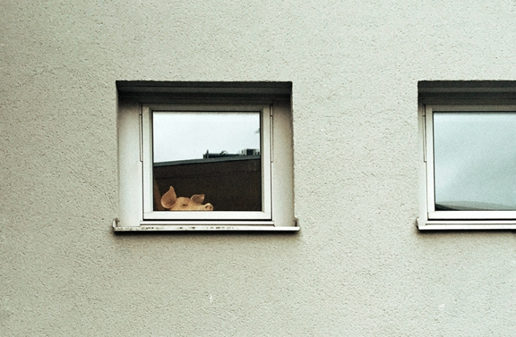 Pig peeking out of the window