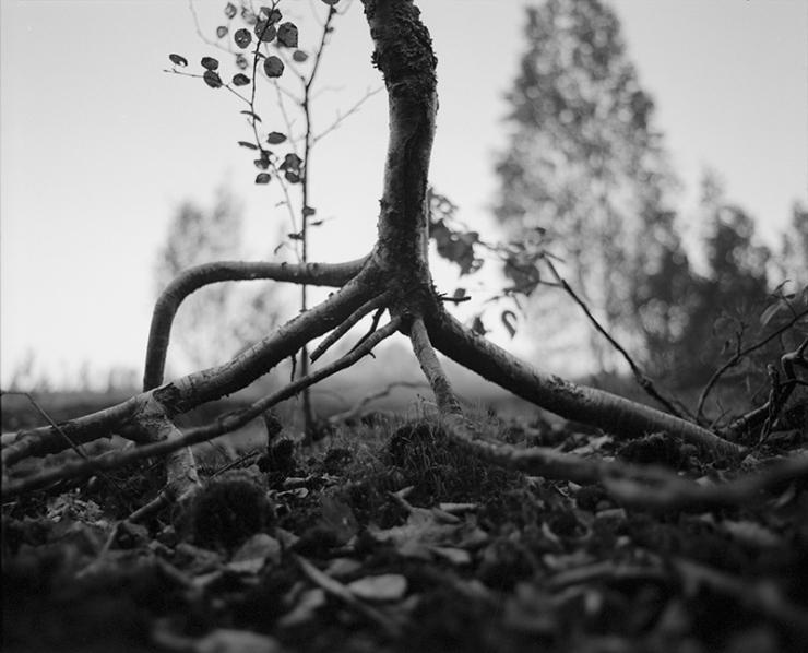 roots2_org_webb
