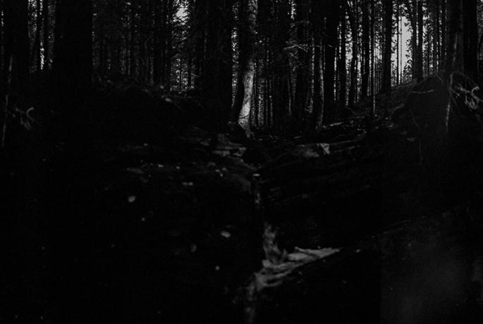 skogsfors_webb