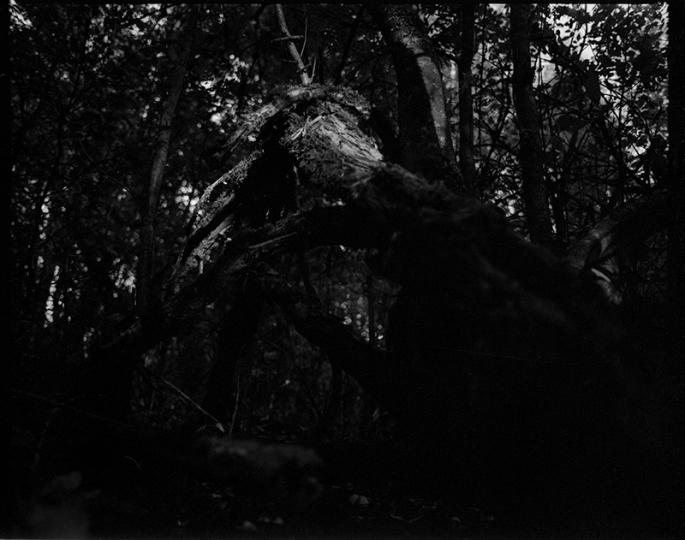 tree_img009_webb