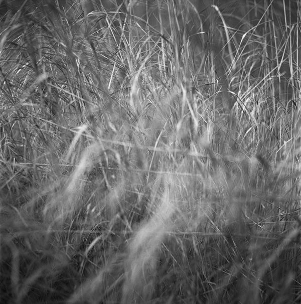 img022_grass_airesrefflex_webb