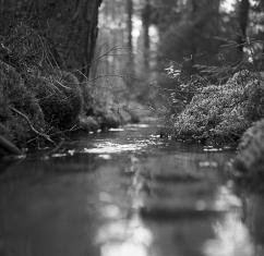 Skogsbäcken #2 2.500 kr 40x40 cm (oinramad) upplaga 15 ex. Fotograferad med bälgkamera Zeiss Ikonta med Kodak Tri-X 400 120 film.