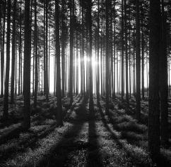 Skogsljus 2.500 kr 40x40 cm (oinramad) upplaga 15 ex. Fotograferad med bälgkamera Zeiss Ikonta med Kodak Tri-X 400 120 film.