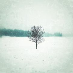 Ett vinterträd 300/500kr