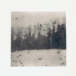 Fåglar i vinterskog - Fotogravyr med fotopolymer