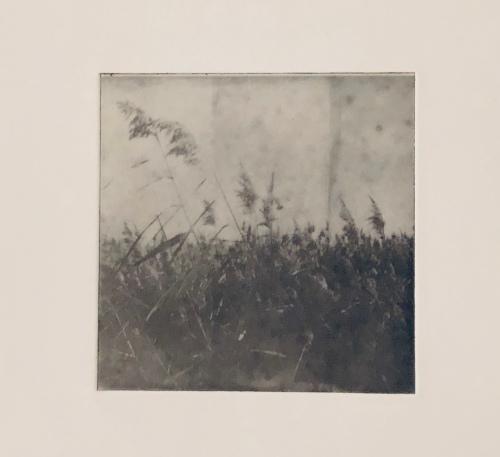 Vajar i vinden - Fotogravyr med fotopolymer