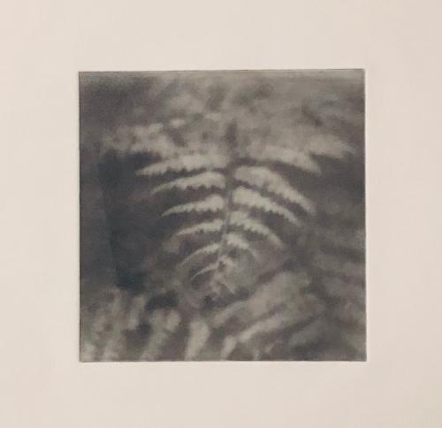 Ormbunke - Fotogravyr med fotopolymer